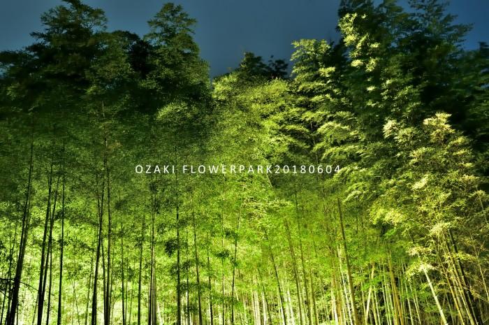 京都 嵐山の竹林