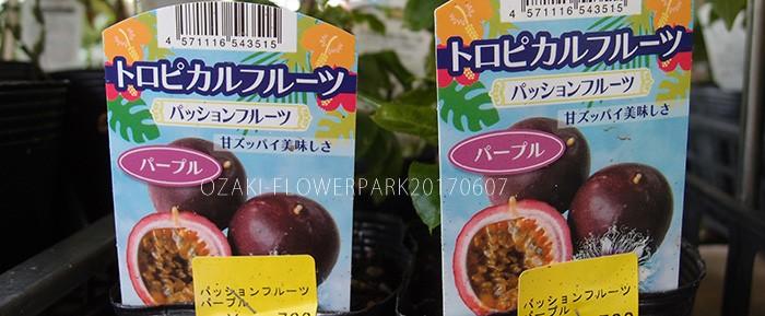 野菜012_パッションフルーツP6077593