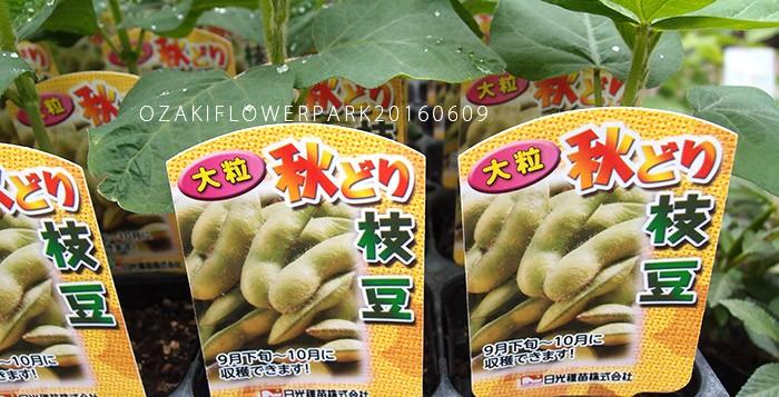 001枝豆