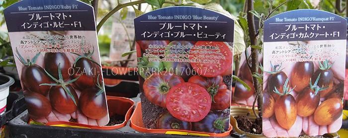 野菜005_トマト_インディゴトマトP6077661