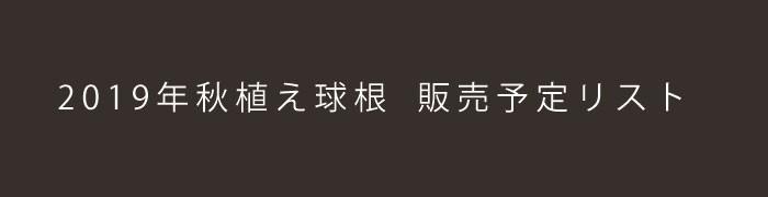 秋植え球根_blogバナーOZAKI_HP