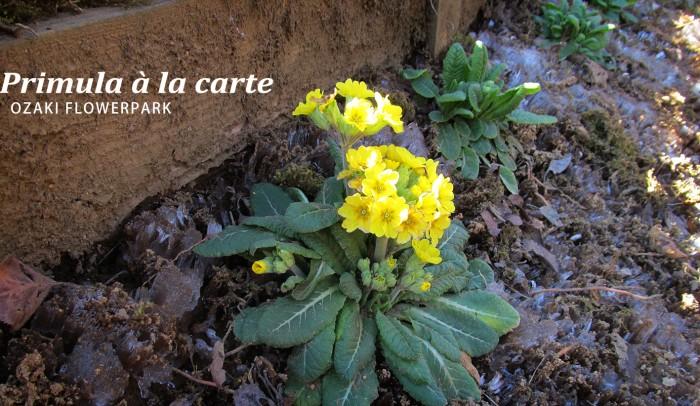 凍てつく大地に花を咲かせるアラカルト