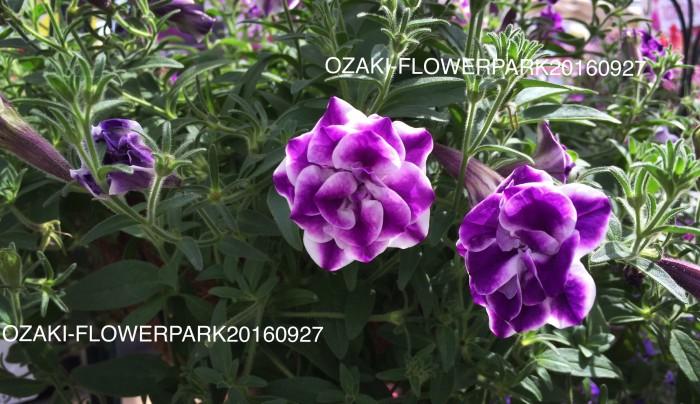 IMG_7795-0.jpg