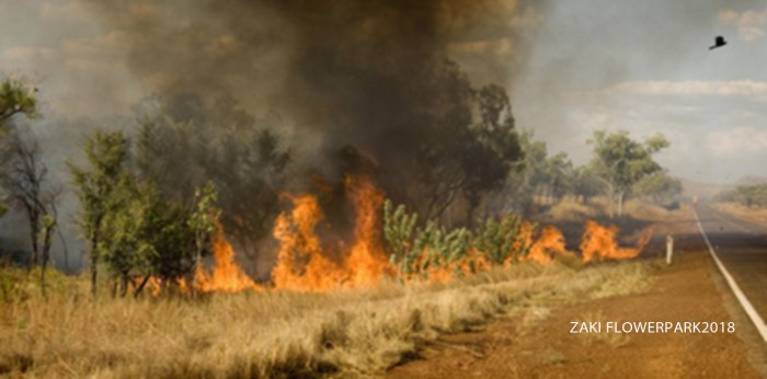 Grassland wildfire, Kununurra, Western Australia, Australia, Pacific