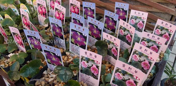 blog_yukiwari20161211