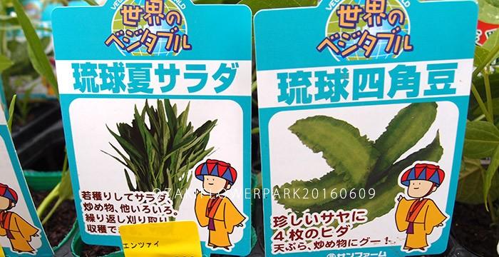 005琉球野菜