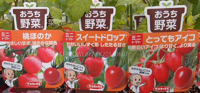野菜004_トマト_おうち野菜P6077749