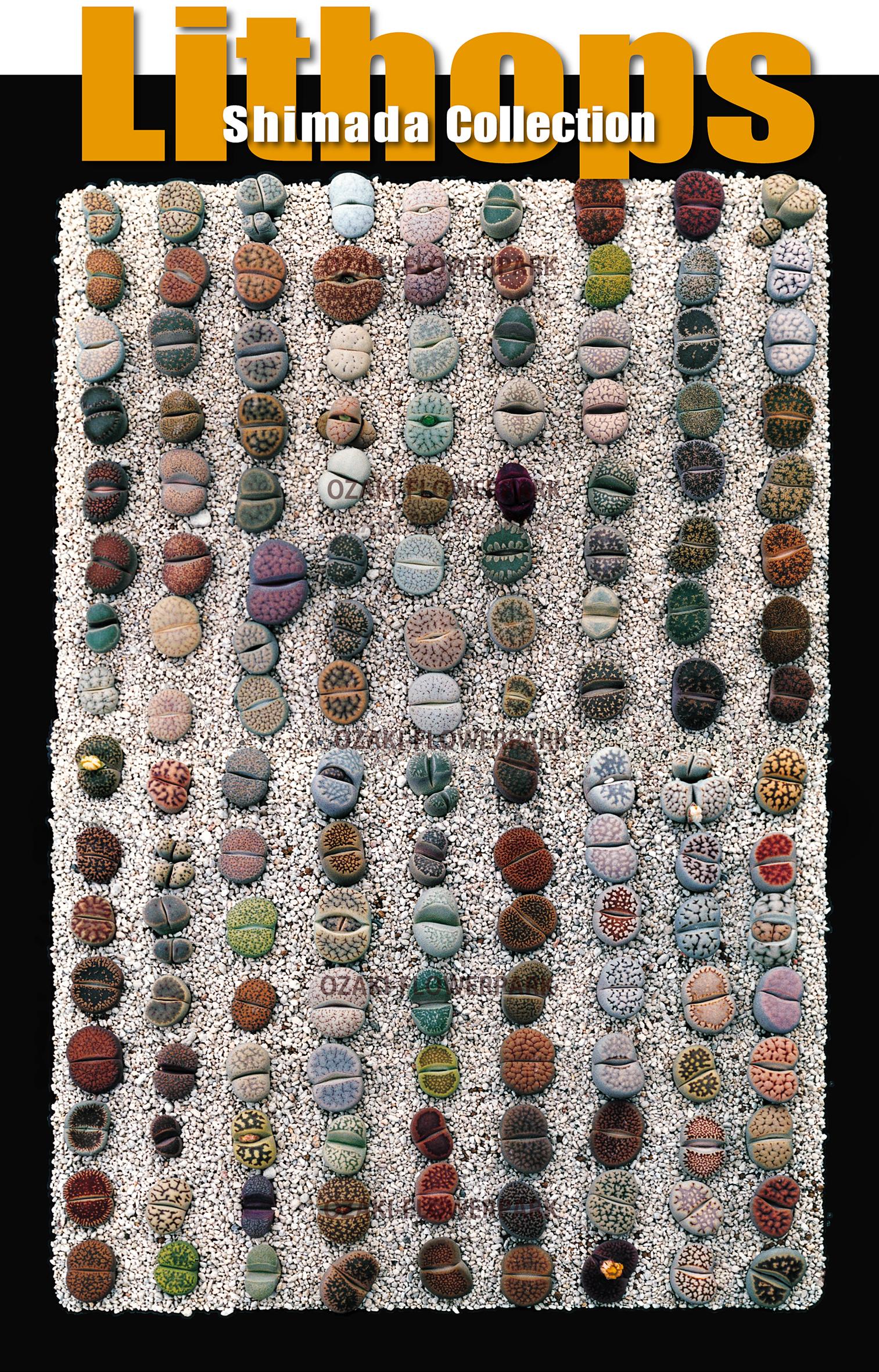 島田コレクション