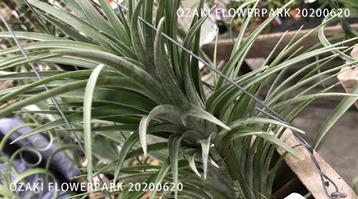 r-700x389
